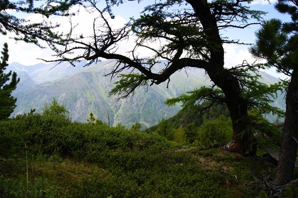 панорам_горы2.jpg