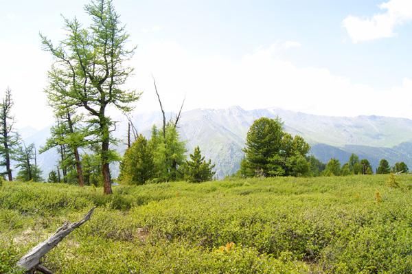 панорама_горы2.jpg